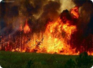 Предотвращение несчастных случаев на воде и лесных пожаров на территории Твери