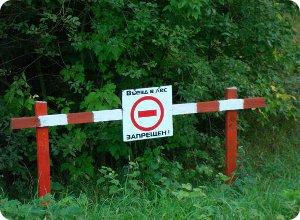 В четырех районах области введен запрет на посещение лесов