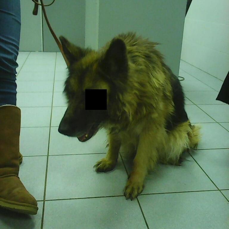 Собаку Герду изъяли, по факту произошедшего полиция проводит проверку
