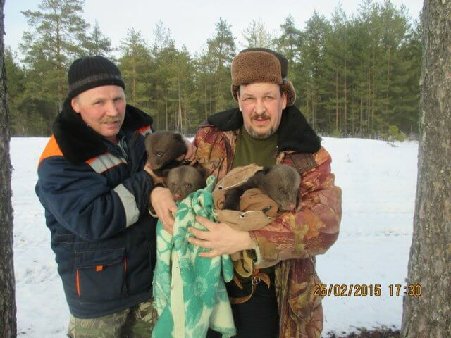 В Спировском районе спасли трёх медвежат