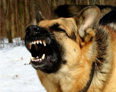 фото В Тверской области следователи проводят проверку по факту укуса собакой ребенка