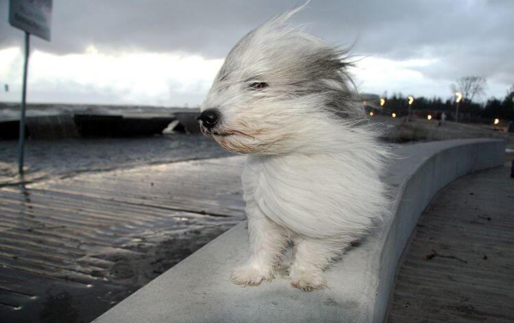 На территории Тверской области ожидается сильный ветер