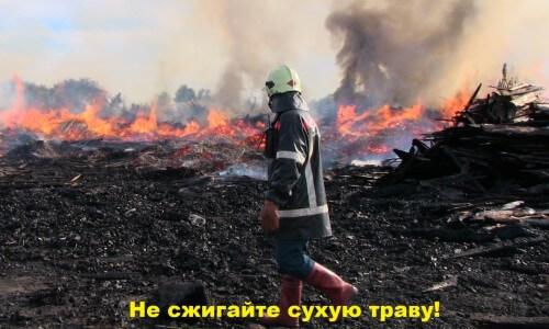 фото Областное МЧС призывает не жечь сухую траву
