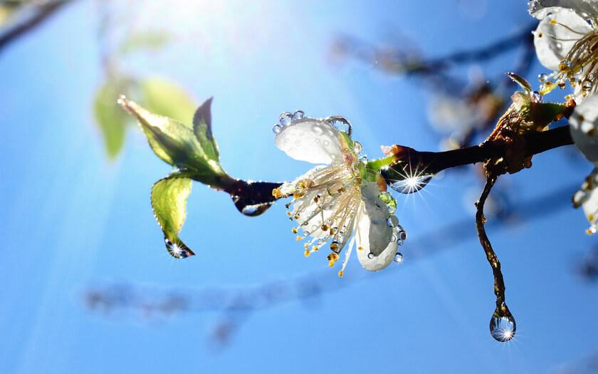Тверской ботанический сад приглашает всех желающих на праздник весны