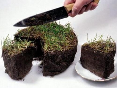 фото Предприимчивые садоводы продавали земельные участки, принадлежащие научно-исследовательскому институту на праве бессрочного пользования