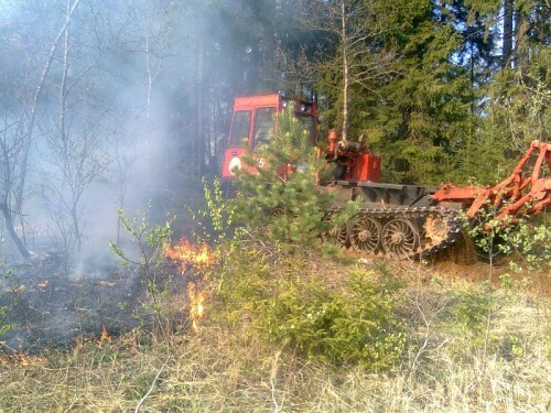 фото В Торопецком районе выгорела лесополоса на площади в 1га