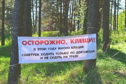 фото В Тверской области более 4000 человек пострадали от укусов клещей, из них почти 1500 - дети