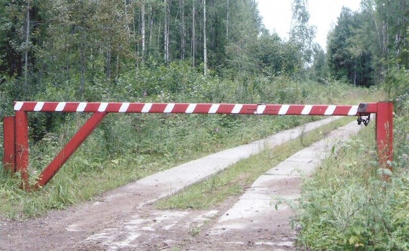 Ограничение на посещение лесов снято в 10 районах области