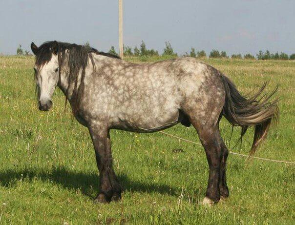 В Калининском районе Тверской области украли трех лошадей