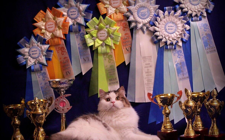 Тверичей в День города приглашают на международную выставку кошек