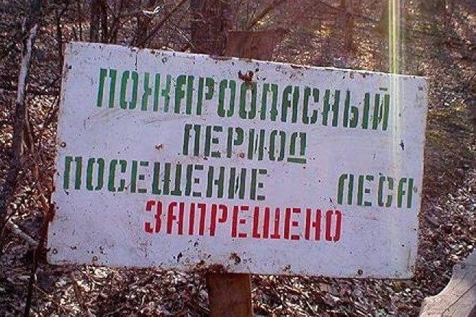 В 14 районах области введен запрет на посещение лесов