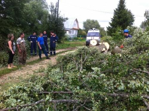 """фото В Твери и в Калининском районе сотрудники АСС спилили несколько """"аварийных"""" деревьев"""