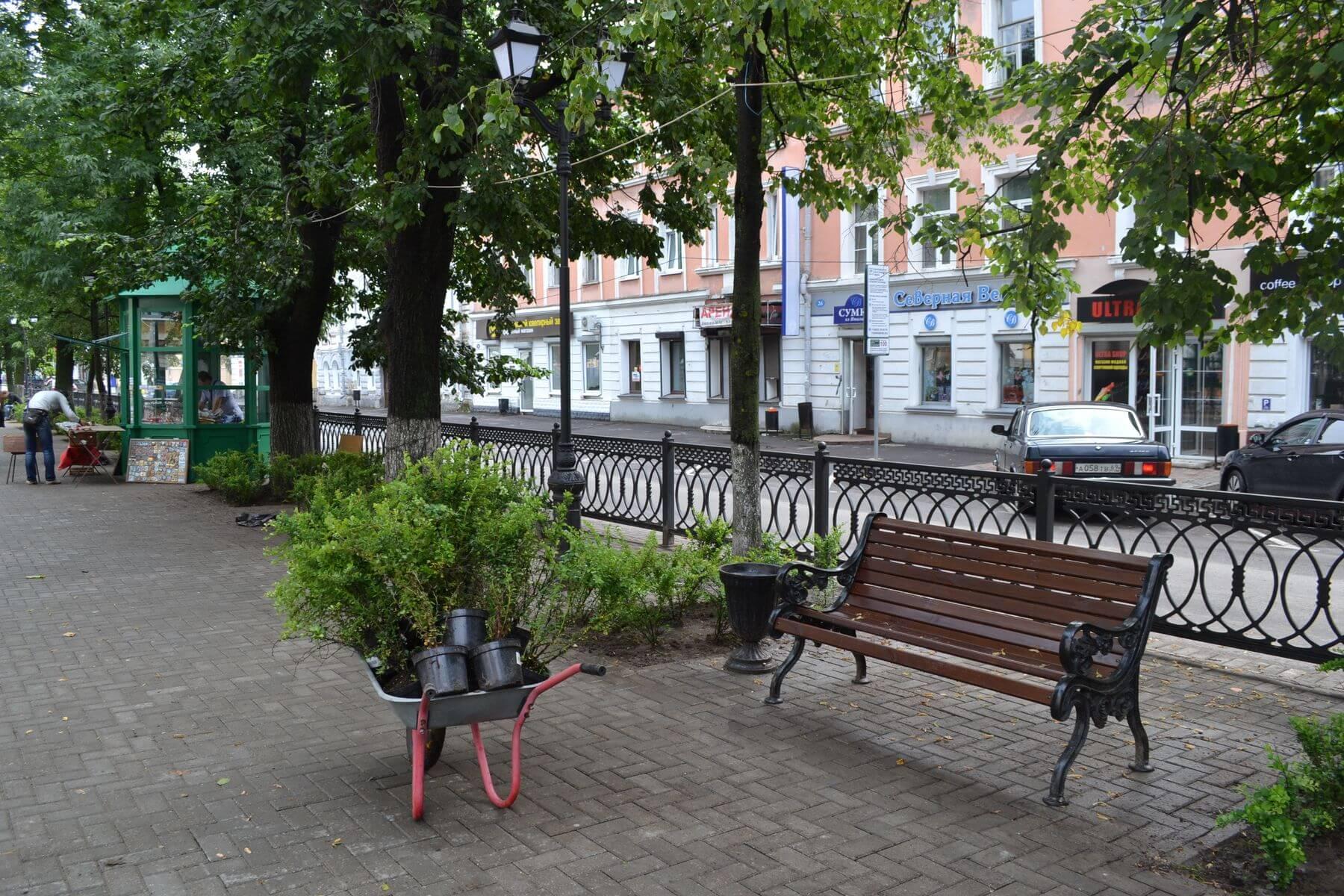 Бульвар Радищева в Твери украсили кусты барбариса