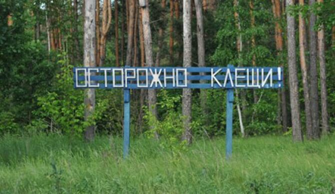 В Тверской области клещи покусали более 6 тысяч человек