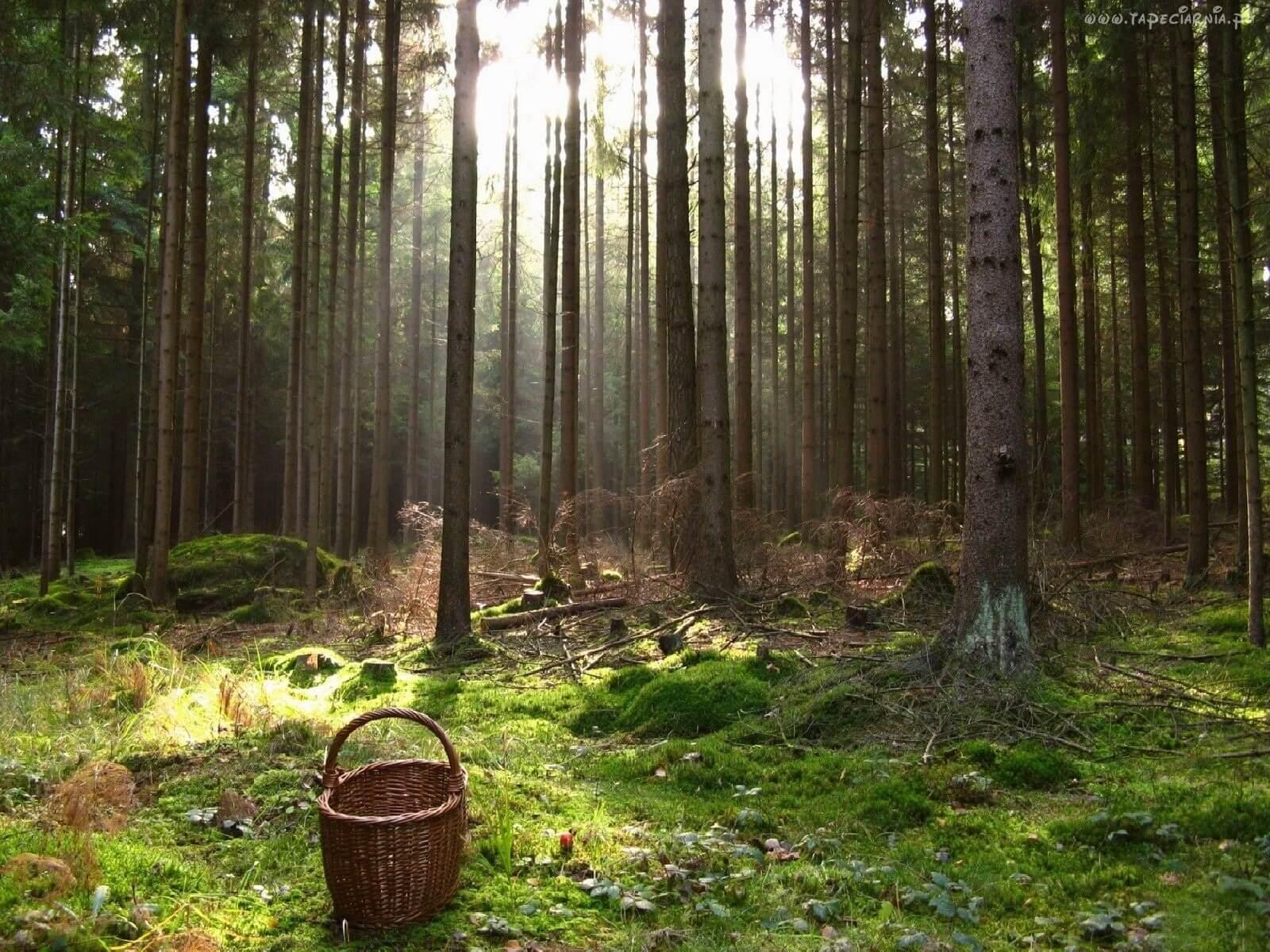 В Тверской области полицейские вывели из леса заблудившихся пенсионеров
