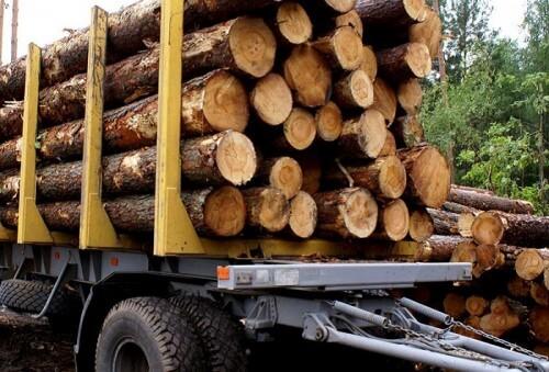 фото В Тверской области продолжается незаконная вырубка леса