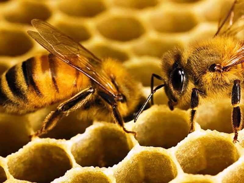 Пчеловоды Тверской области проведут тематический слет