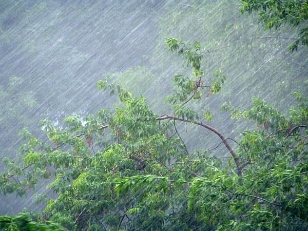 В ночь на 21 июля на территории области ожидается усиление ветра и дождь с грозой