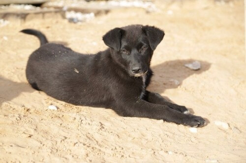 фото Помощь животным как образ жизни