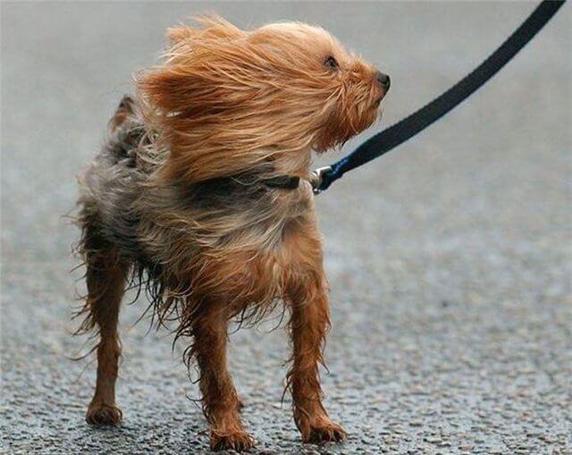 В ближайшие часы в нескольких районах области и в Твери ожидается усиление ветра