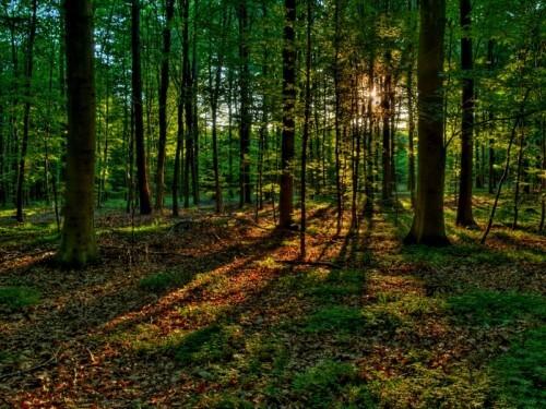фото В Осташковском районе установят официальные границы природоохранных зон общей площадью около 10 тысяч гектаров
