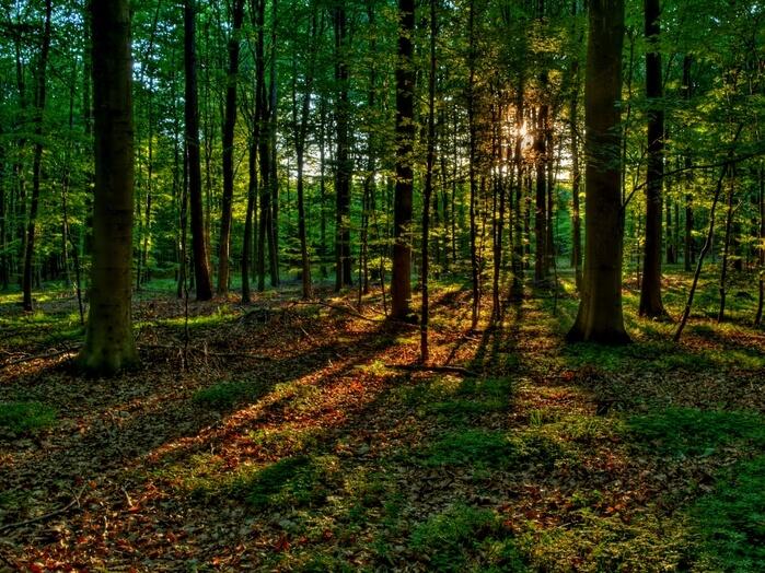 В Осташковском районе установят официальные границы природоохранных зон общей площадью около 10 тысяч гектаров
