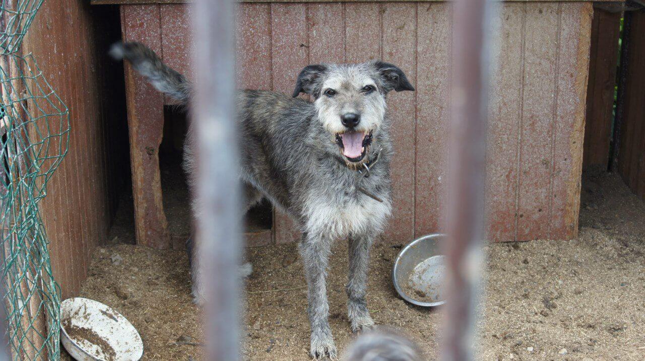 В Твери будет проходить акция по сбору помощи для животных из приюта в Больших Перемерках