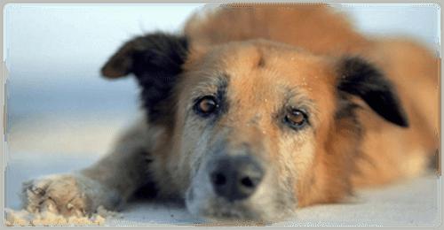 фото Тверичей приглашают помочь животным