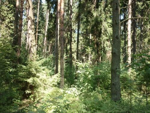 фото ОНФ проведет проверку по факту продажи лесных земель в Кимрском районе
