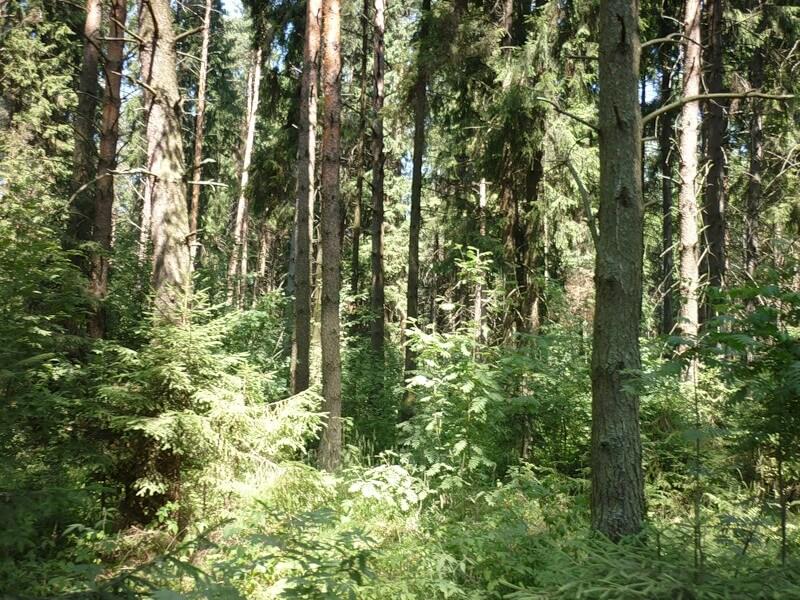 ОНФ проведет проверку по факту продажи лесных земель в Кимрском районе