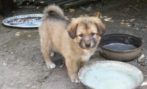 """фото В Твери проходит акция """"Десятка десятого"""" в помощь бездомным животным"""