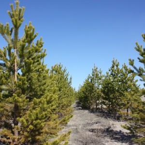 фото Тверская область в 2015 году перевыполнила план по лесовосстановительным мероприятиям
