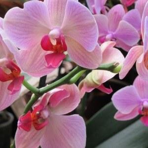 """фото В Твери пройдет выставка орхидей """"Радужные искры любви"""""""