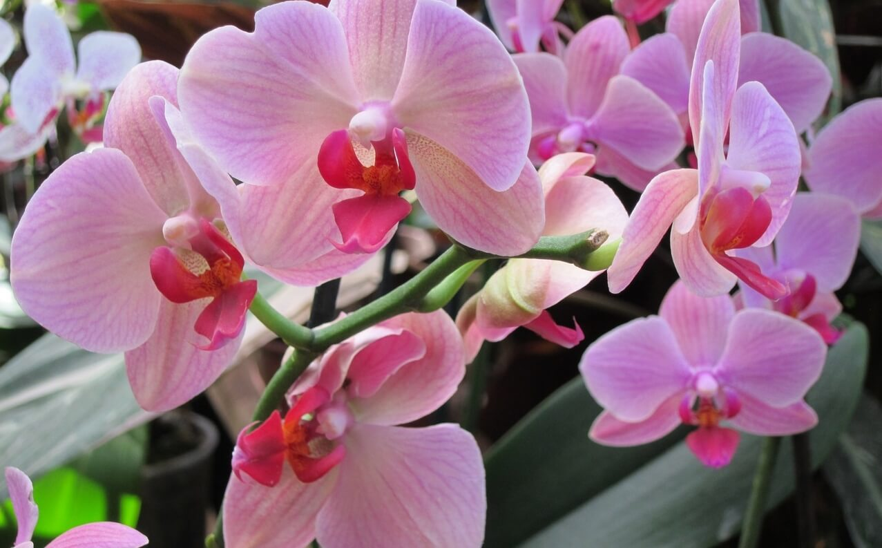 """В Твери пройдет выставка орхидей """"Радужные искры любви"""""""