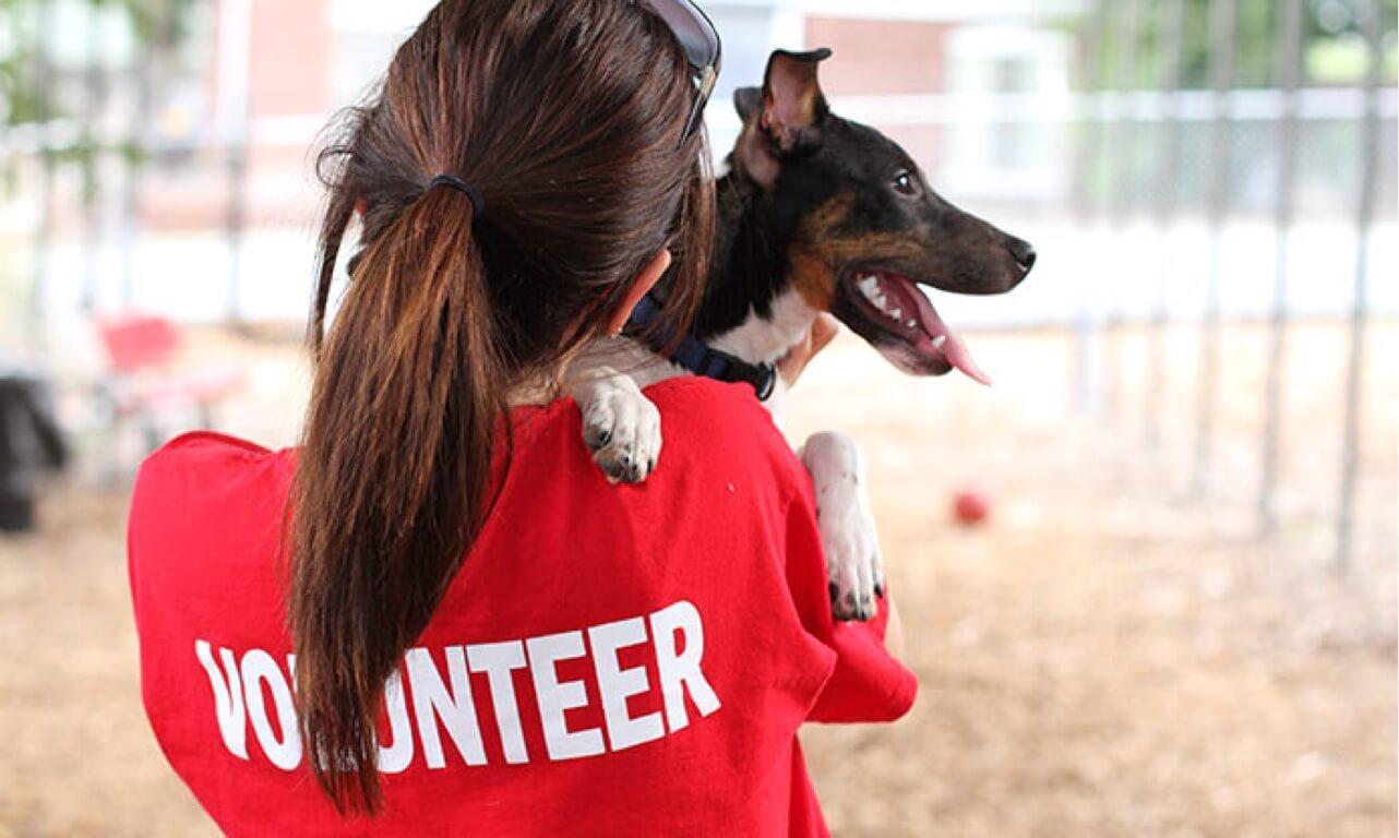 Волонтеры и животные картинки