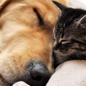 """фото Акция """"Десятка десятого"""" поможет бездомным животным"""