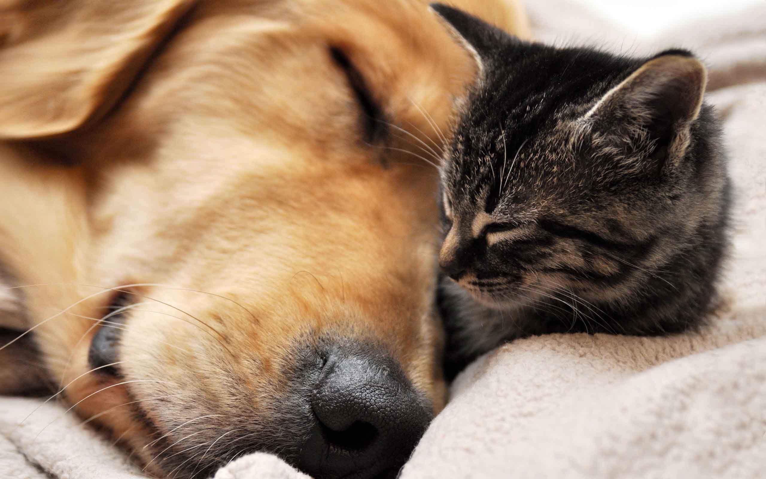 В Твери пройдет благотворительная акция от Инициативной группы по защите животных