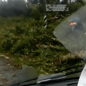 фото В Тверской области штормовой ветер валил деревья прямо на дорогу