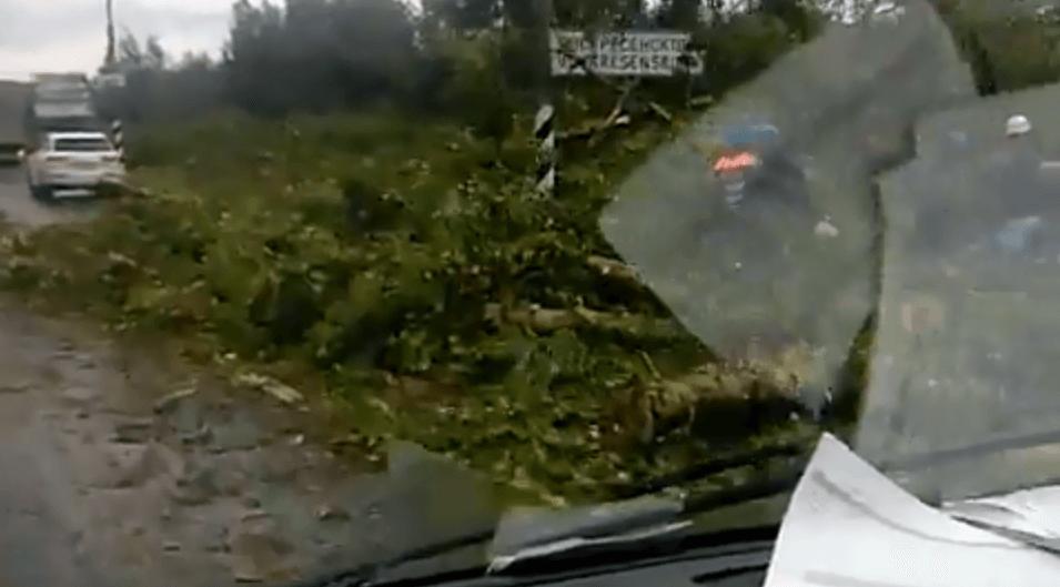 В Тверской области штормовой ветер валил деревья прямо на дорогу
