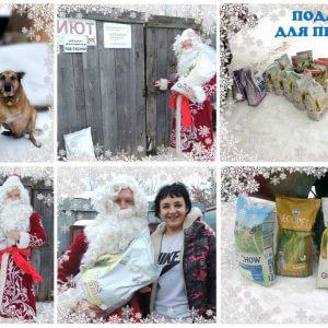 фото Дед Мороз для четырехлапиков