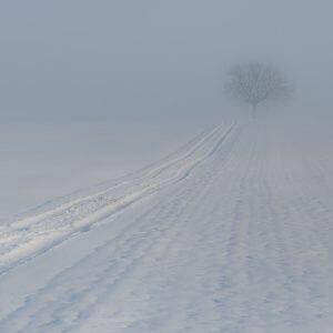 фото В отдельных районах Тверской области ожидается сильный туман