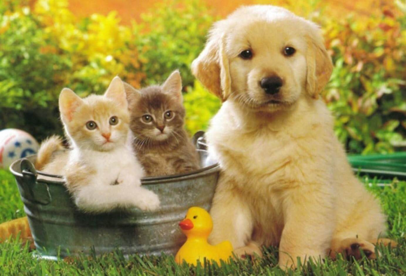 Волонтеры собирают средства в помощь бездомным животным