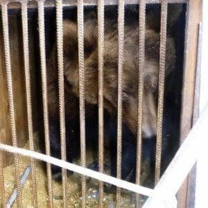 фото Оленинские спасатели помогли спасти цирковых медведей