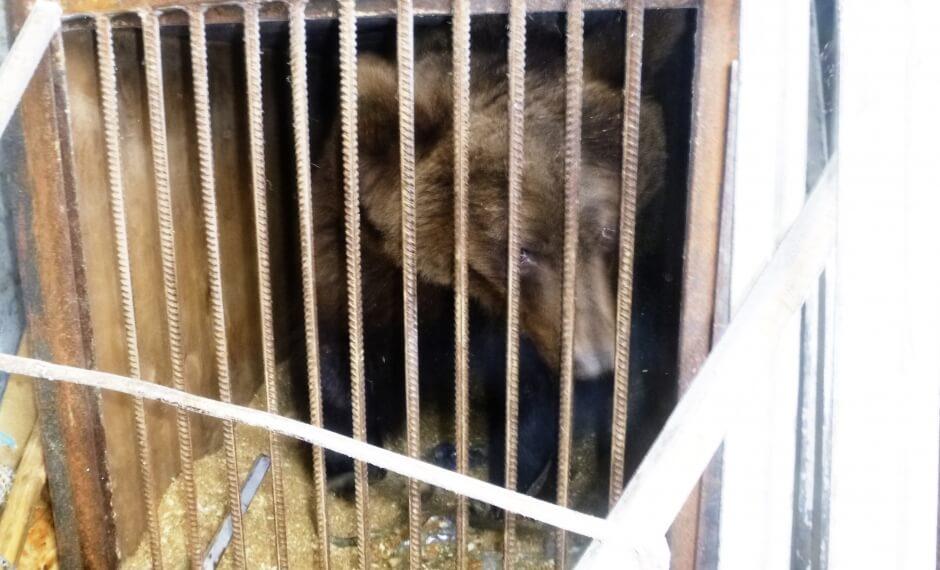 Оленинские спасатели помогли спасти цирковых медведей
