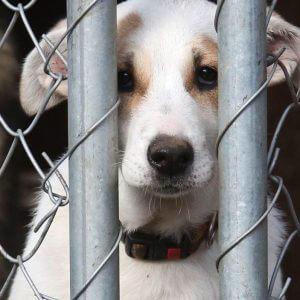 фото Приют для бездомных животных создадут на базе Тверской сельхозакадемии
