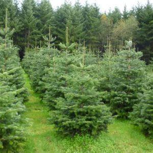 фото В Тверской области планируют восстановить лесные массивы на территории в 17 тысяч гектаров
