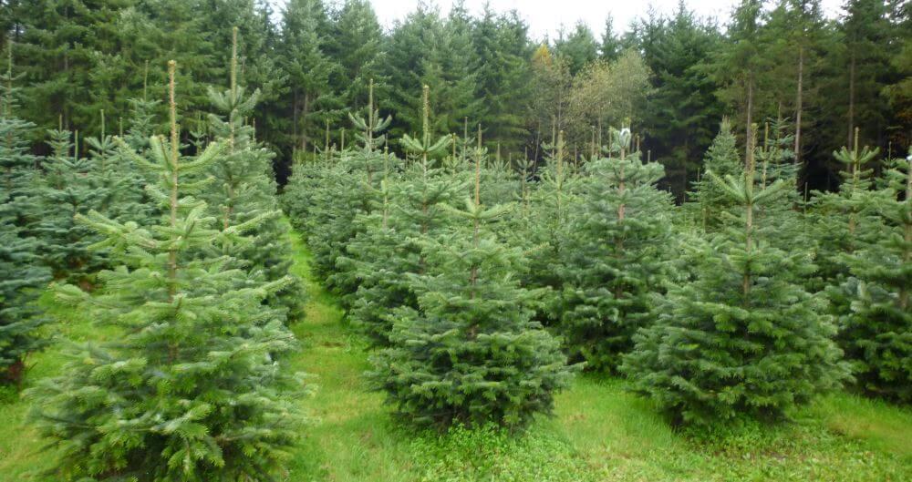 В Тверской области планируют восстановить лесные массивы на территории в 17 тысяч гектаров
