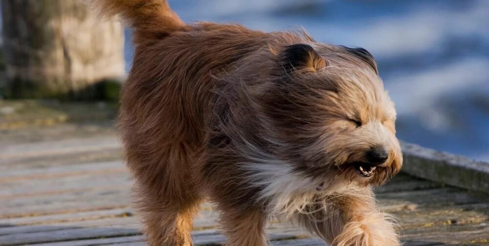 На территории Тверской области сохранится сильный ветер