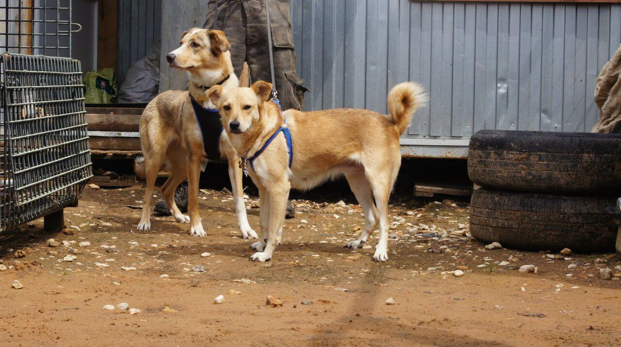 """Благотворительный фонд """"Лав Энималс"""" просит помощи в организации медицинских услуг для подопечных животных"""