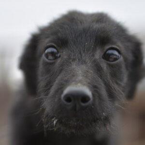 фото Тверской приют для собак ищет кураторов